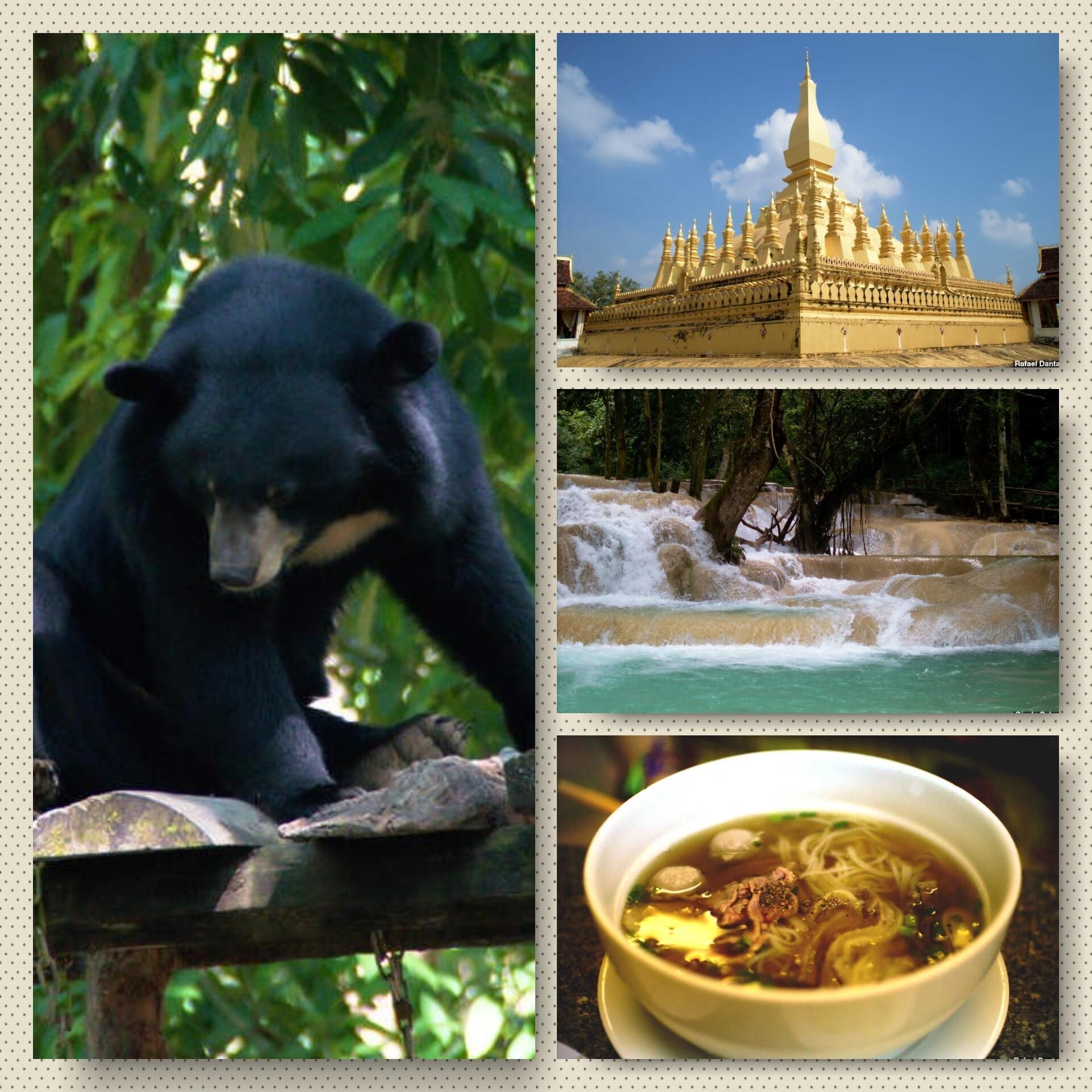 Em sentido horário: urso da organização Free the Bears, o monumento Pha That Luang e a cachoeira Tad Sae, no Laos. Já na última foto, um dos maravilhosos pratos que experimentamos durante a nossa estadia na região