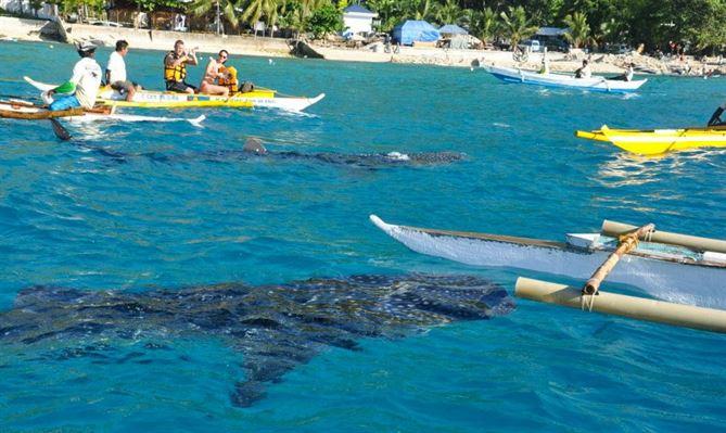 mergulho com tubaroes-baleia oslob filipinas