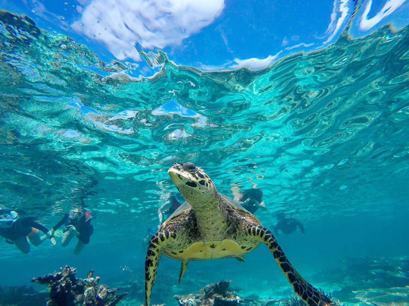 tartaruga marinha maldivas